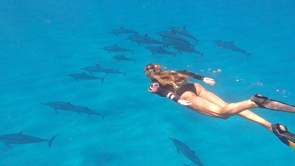 Adriana Harlan swimming with dolphins in Hawaii.